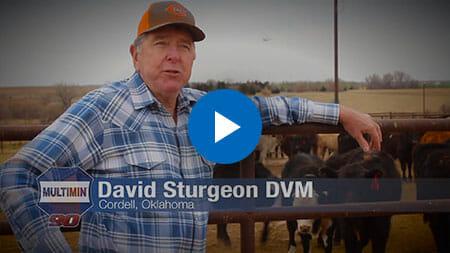Dr. David Sturgeon DVM